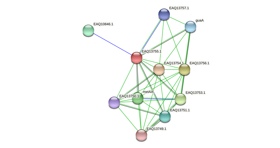 RB2654_03539 protein (Maritimibacter alkaliphilus) - STRING interaction network