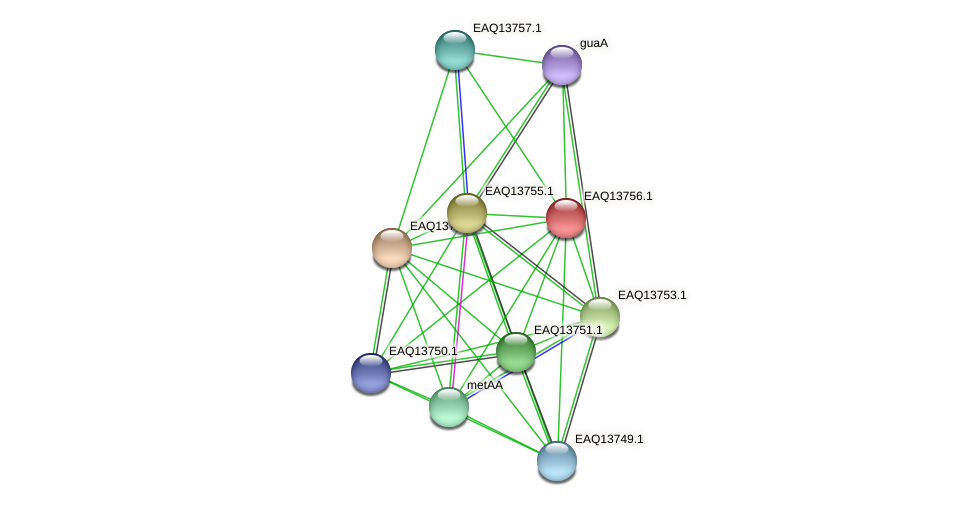RB2654_03544 protein (Maritimibacter alkaliphilus) - STRING interaction network