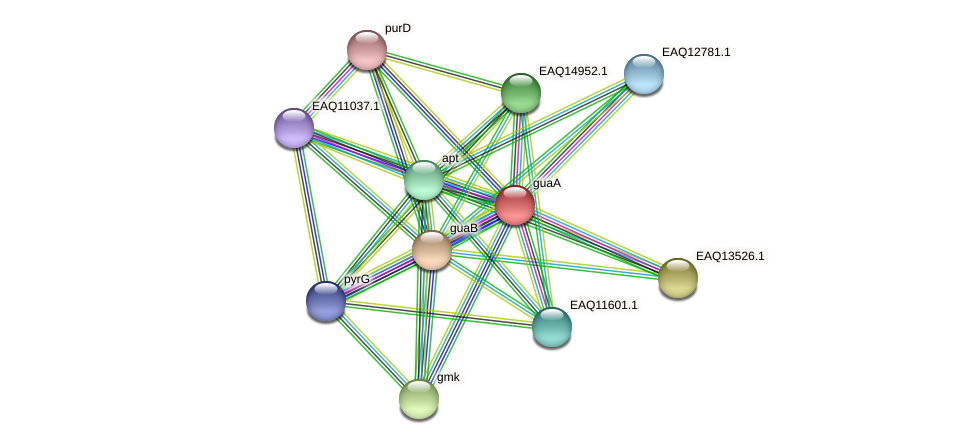 guaA protein (Maritimibacter alkaliphilus) - STRING interaction network