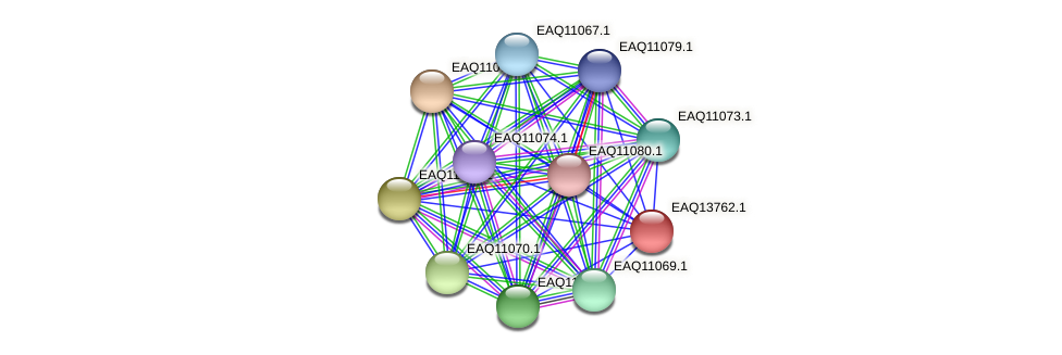 RB2654_03574 protein (Maritimibacter alkaliphilus) - STRING interaction network