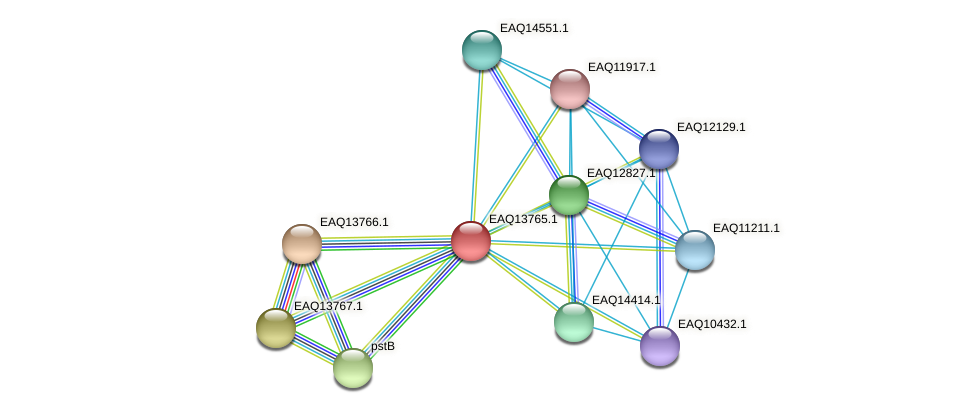 RB2654_03589 protein (Maritimibacter alkaliphilus) - STRING interaction network