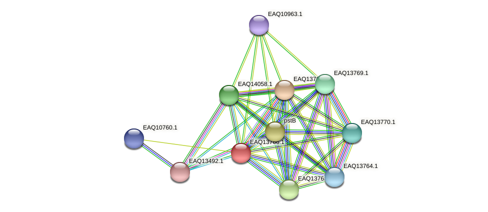 RB2654_03594 protein (Maritimibacter alkaliphilus) - STRING interaction network