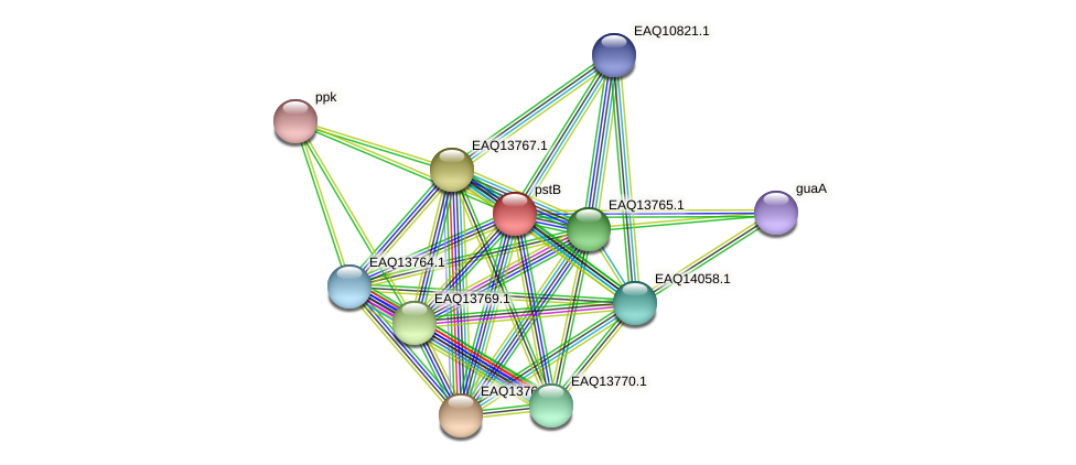 pstB protein (Maritimibacter alkaliphilus) - STRING interaction network