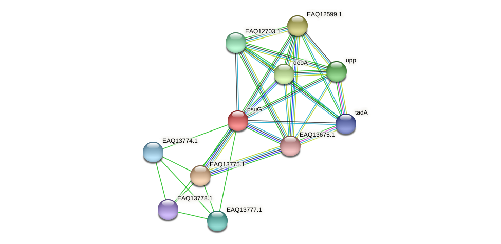 psuG protein (Maritimibacter alkaliphilus) - STRING interaction network
