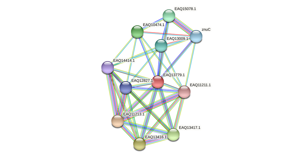 RB2654_03659 protein (Maritimibacter alkaliphilus) - STRING interaction network