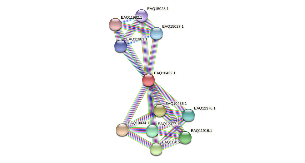 RB2654_03719 protein (Maritimibacter alkaliphilus) - STRING interaction network