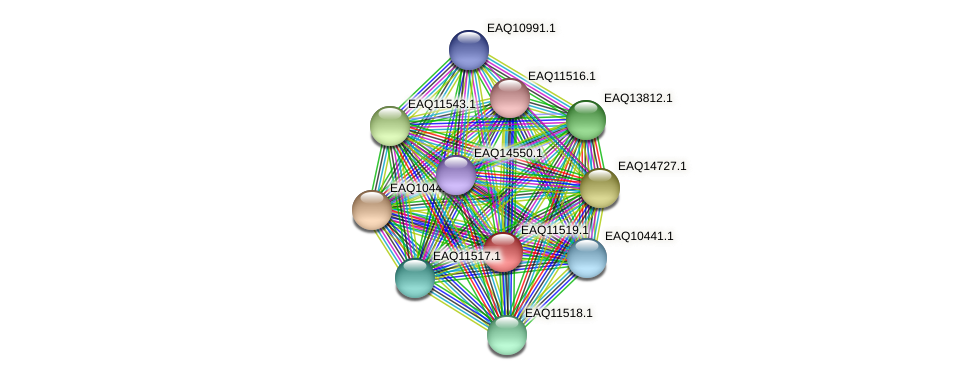 RB2654_03789 protein (Maritimibacter alkaliphilus) - STRING interaction network