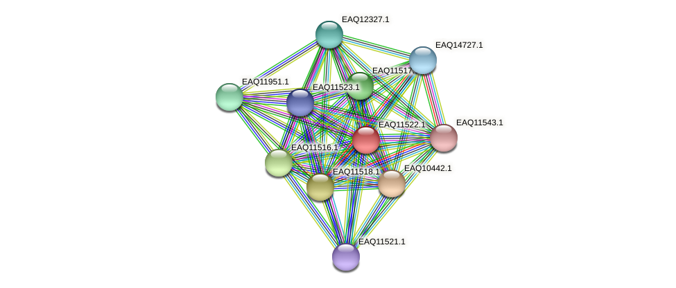 RB2654_03804 protein (Maritimibacter alkaliphilus) - STRING interaction network