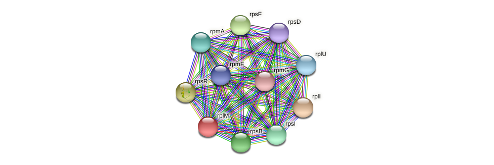 rplM protein (Maritimibacter alkaliphilus) - STRING interaction network