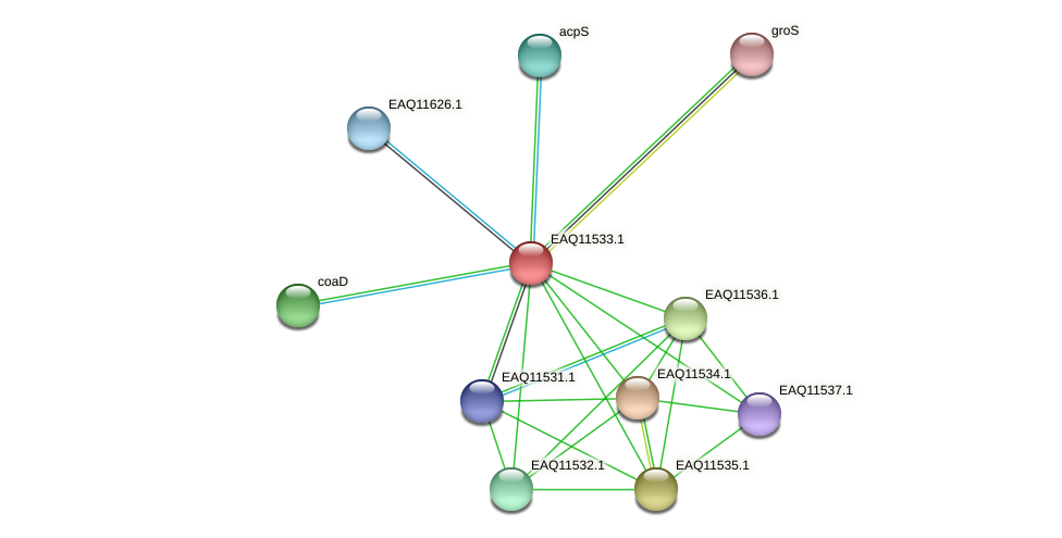 RB2654_03859 protein (Maritimibacter alkaliphilus) - STRING interaction network