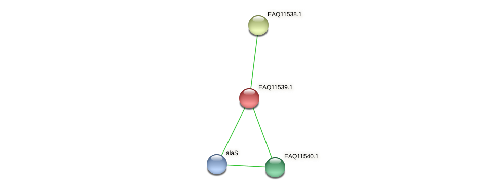 RB2654_03889 protein (Maritimibacter alkaliphilus) - STRING interaction network