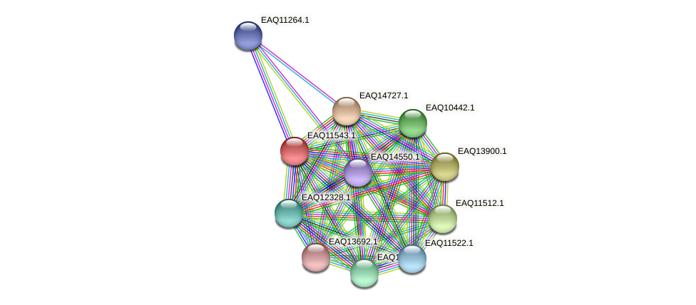 RB2654_03909 protein (Maritimibacter alkaliphilus) - STRING interaction network