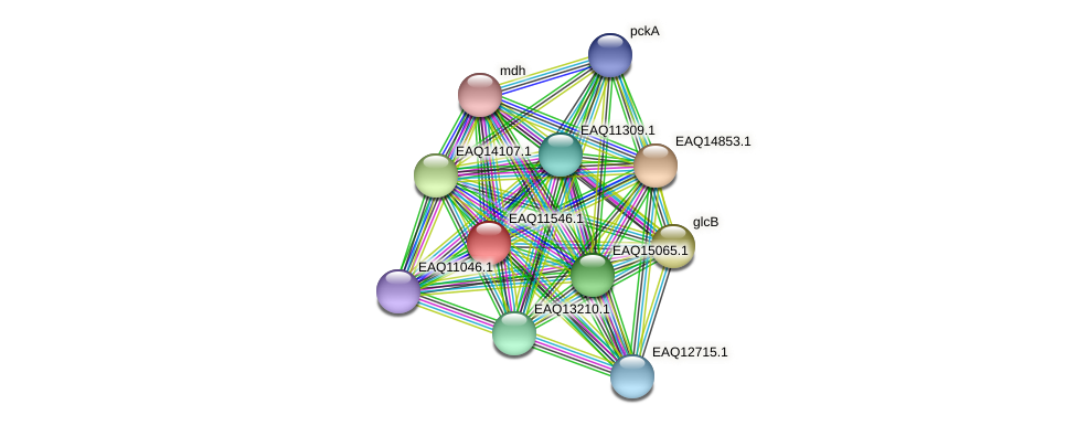 RB2654_03924 protein (Maritimibacter alkaliphilus) - STRING interaction network