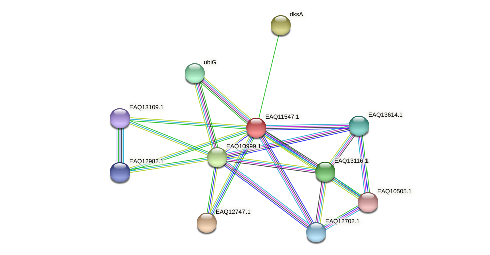 RB2654_03929 protein (Maritimibacter alkaliphilus) - STRING interaction network