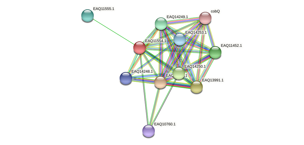 RB2654_03964 protein (Maritimibacter alkaliphilus) - STRING interaction network