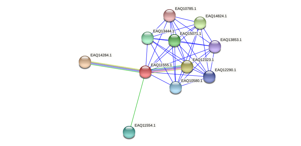 RB2654_03969 protein (Maritimibacter alkaliphilus) - STRING interaction network