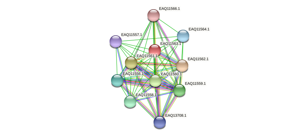 RB2654_04009 protein (Maritimibacter alkaliphilus) - STRING interaction network