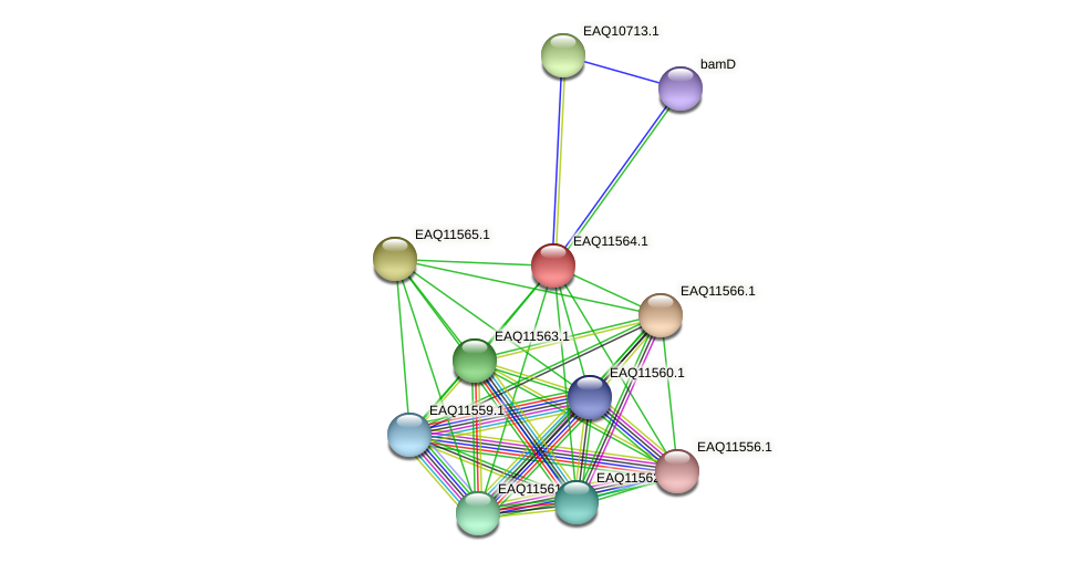 RB2654_04014 protein (Maritimibacter alkaliphilus) - STRING interaction network