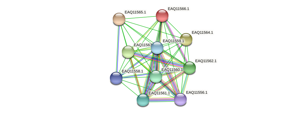 RB2654_04024 protein (Maritimibacter alkaliphilus) - STRING interaction network