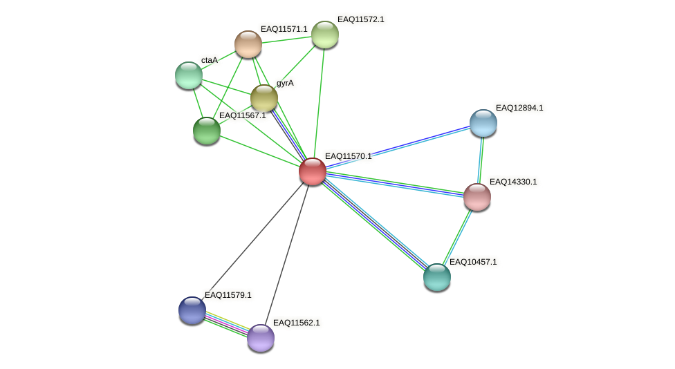 RB2654_04044 protein (Maritimibacter alkaliphilus) - STRING interaction network