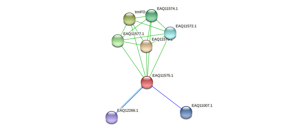 RB2654_04069 protein (Maritimibacter alkaliphilus) - STRING interaction network