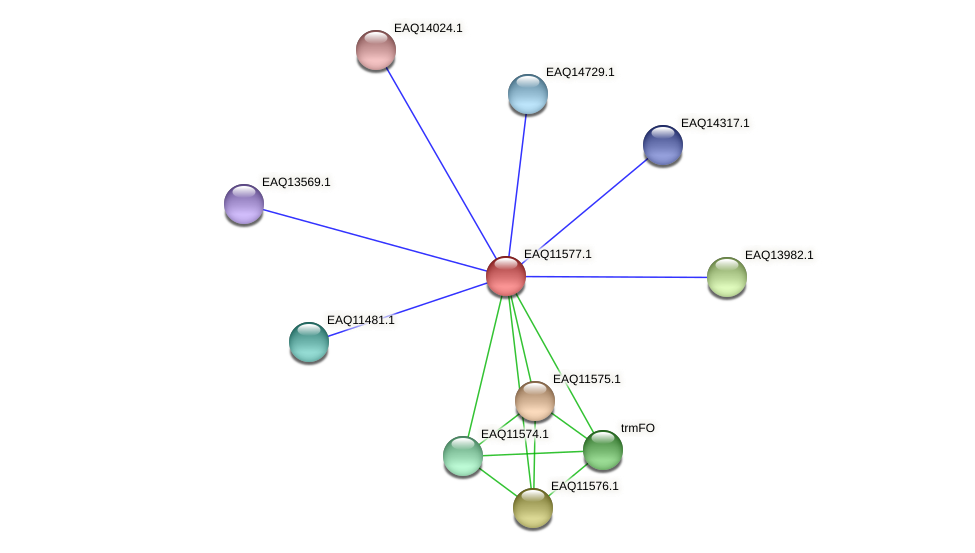 RB2654_04079 protein (Maritimibacter alkaliphilus) - STRING interaction network