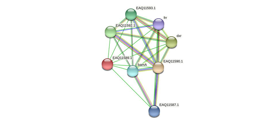RB2654_04139 protein (Maritimibacter alkaliphilus) - STRING interaction network