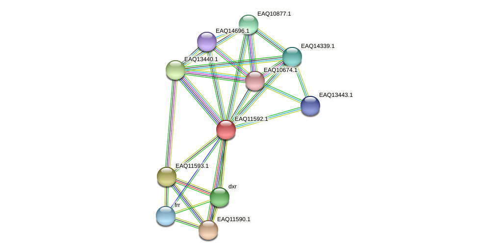 RB2654_04154 protein (Maritimibacter alkaliphilus) - STRING interaction network
