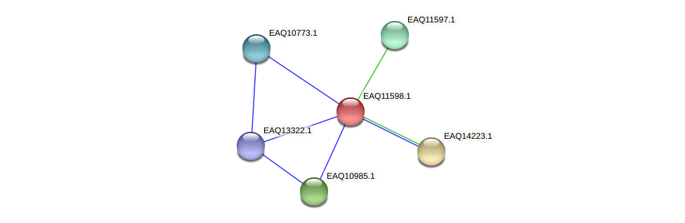 RB2654_04184 protein (Maritimibacter alkaliphilus) - STRING interaction network