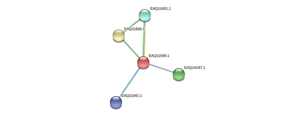 RB2654_04189 protein (Maritimibacter alkaliphilus) - STRING interaction network