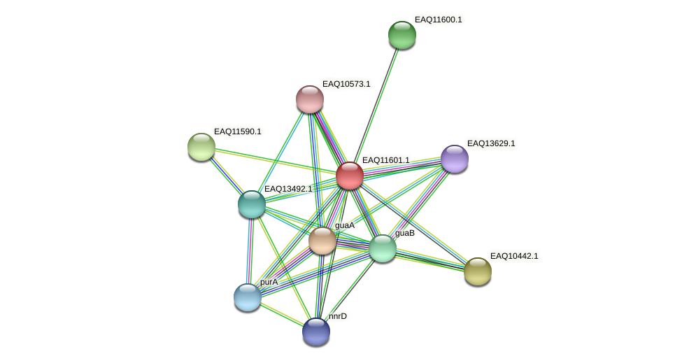 RB2654_04199 protein (Maritimibacter alkaliphilus) - STRING interaction network