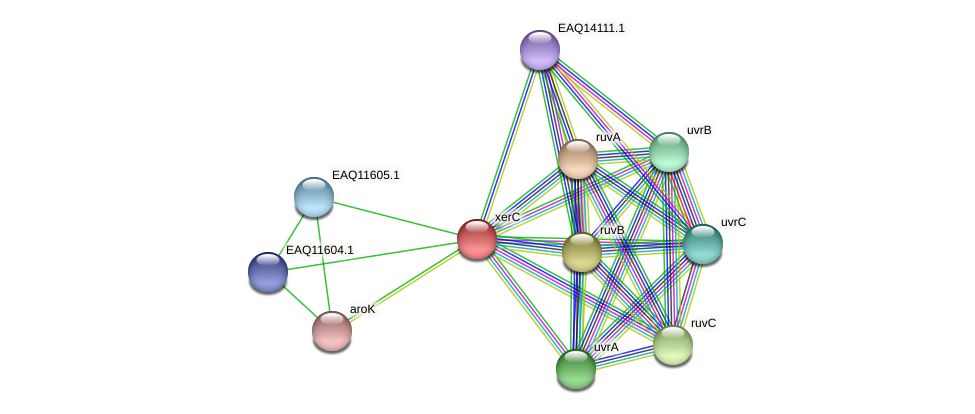 RB2654_04224 protein (Maritimibacter alkaliphilus) - STRING interaction network