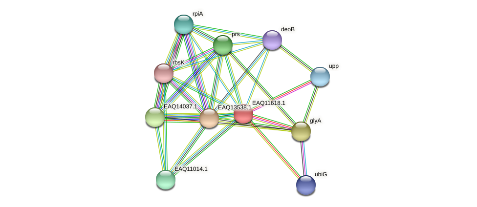 RB2654_04284 protein (Maritimibacter alkaliphilus) - STRING interaction network
