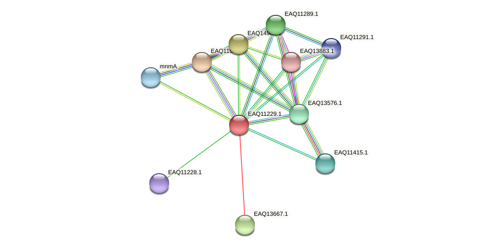 RB2654_04351 protein (Maritimibacter alkaliphilus) - STRING interaction network