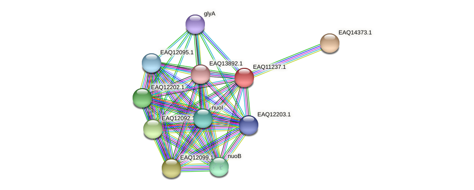 RB2654_04391 protein (Maritimibacter alkaliphilus) - STRING interaction network