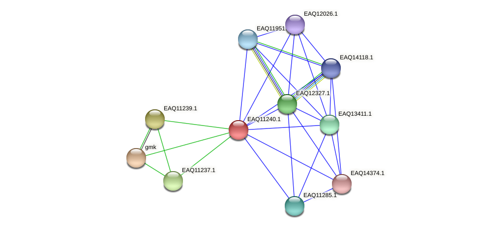 RB2654_04406 protein (Maritimibacter alkaliphilus) - STRING interaction network