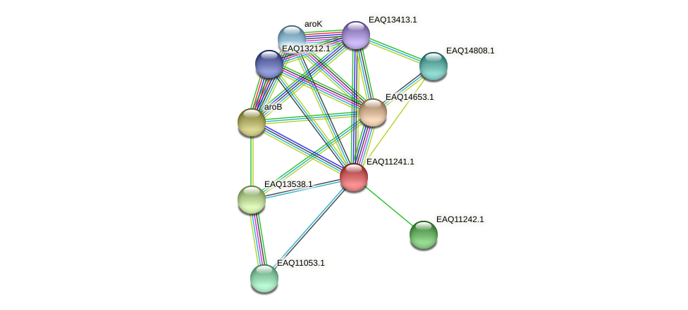 RB2654_04411 protein (Maritimibacter alkaliphilus) - STRING interaction network