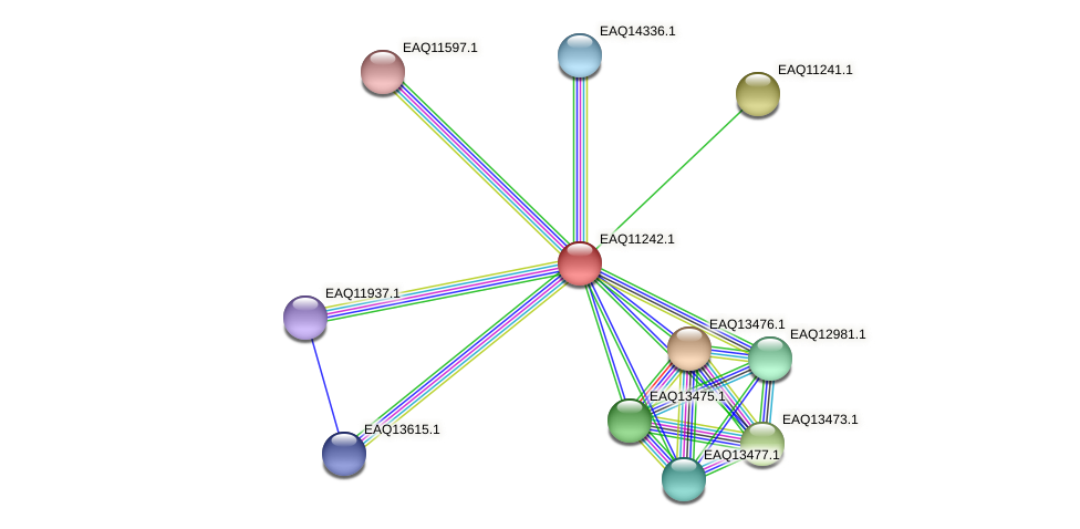 RB2654_04416 protein (Maritimibacter alkaliphilus) - STRING interaction network