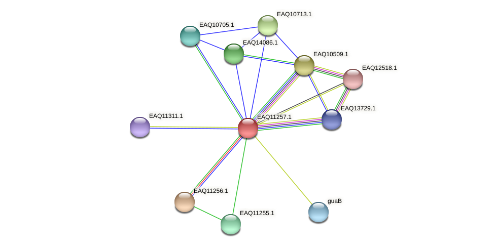 RB2654_04491 protein (Maritimibacter alkaliphilus) - STRING interaction network