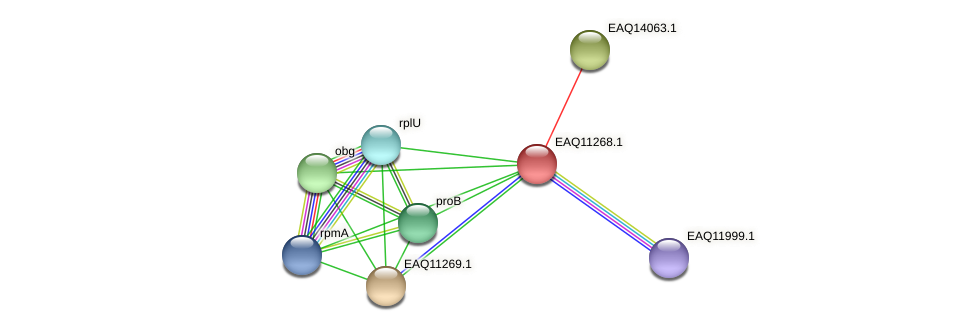 RB2654_04546 protein (Maritimibacter alkaliphilus) - STRING interaction network