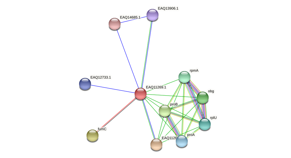 RB2654_04551 protein (Maritimibacter alkaliphilus) - STRING interaction network