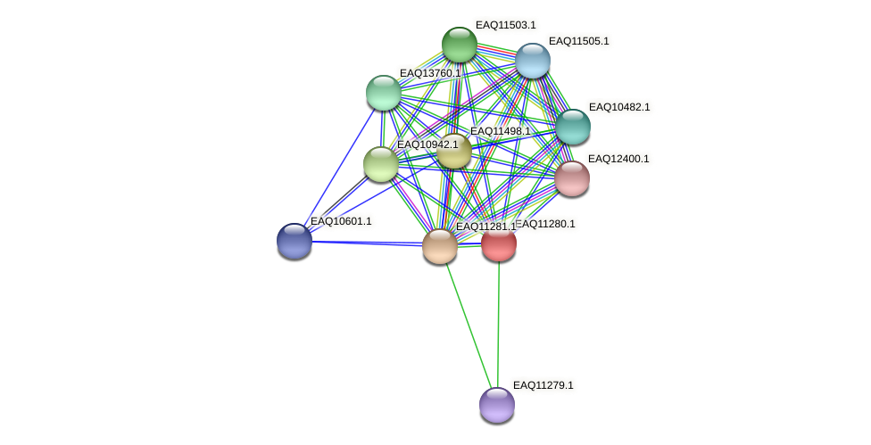 RB2654_04606 protein (Maritimibacter alkaliphilus) - STRING interaction network