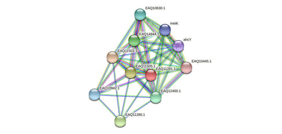 RB2654_04611 protein (Maritimibacter alkaliphilus) - STRING interaction network