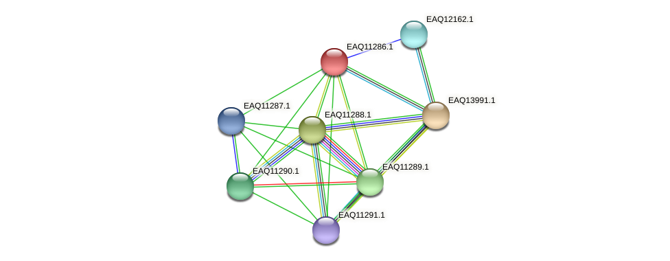 RB2654_04636 protein (Maritimibacter alkaliphilus) - STRING interaction network