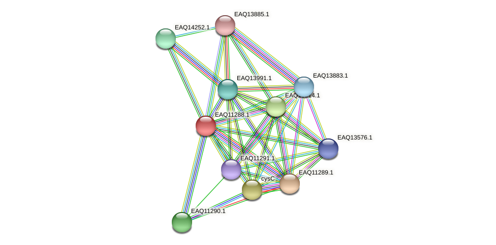 RB2654_04646 protein (Maritimibacter alkaliphilus) - STRING interaction network