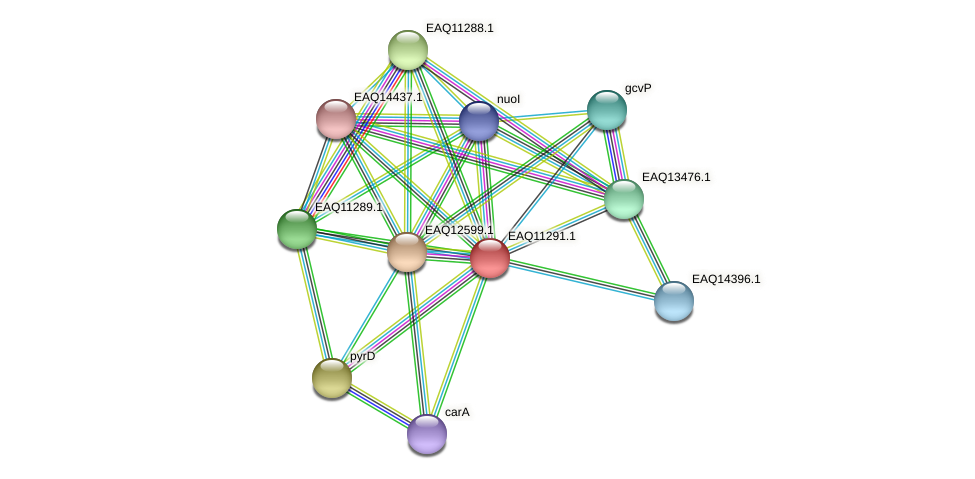 RB2654_04661 protein (Maritimibacter alkaliphilus) - STRING interaction network