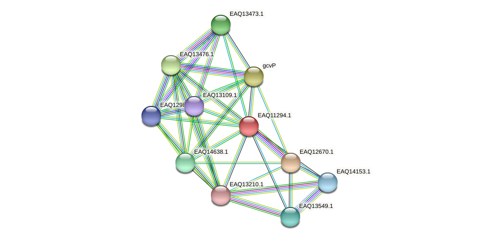 RB2654_04676 protein (Maritimibacter alkaliphilus) - STRING interaction network