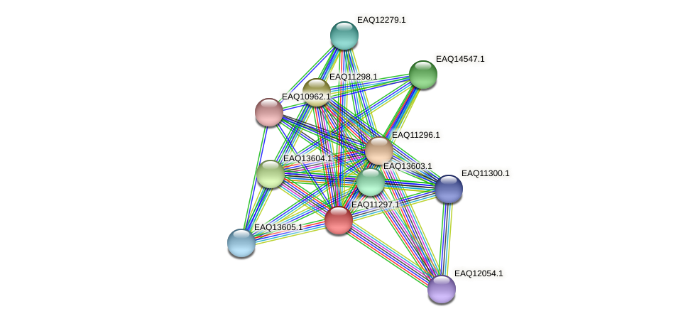 RB2654_04691 protein (Maritimibacter alkaliphilus) - STRING interaction network