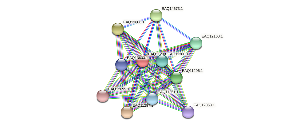RB2654_04696 protein (Maritimibacter alkaliphilus) - STRING interaction network