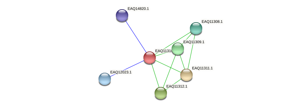 RB2654_04756 protein (Maritimibacter alkaliphilus) - STRING interaction network